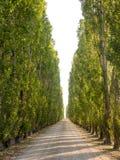 Włoska droga Obrazy Royalty Free