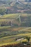 Włoski jedzenie i napój: ziemia czerwone wino obraz royalty free