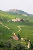 włoskie gromadzcy langhe winnice Obrazy Royalty Free