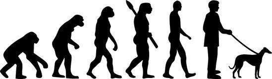 Włoskiej charcicy ewolucja royalty ilustracja