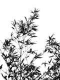 wśród bambusowego popiołu drzewa Zdjęcie Stock