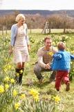 wśród daffodils rodzinnej wiosna chodzących potomstw Obrazy Royalty Free