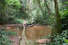 Wśrodku Afrykańskiego tropikalny las deszczowy fotografia royalty free