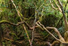 Wśrodku Horton równiny highland park spisujący na UNESCO zdjęcia stock