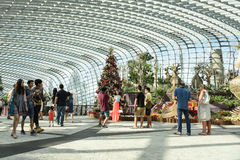 Wśrodku Obłocznej lasowej kopuły Fotografia Stock