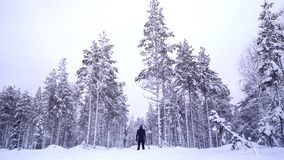 Wśrodku zamarzniętego lasu Lapland zdjęcia stock