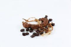 Włókna tamarynda Zdjęcie Royalty Free