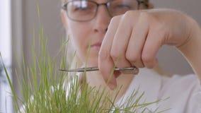 W średnim wieku kobieta z szkłami na jego oczach, kosi gazon z manicure nożycami zdjęcie wideo