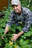 W średnim wieku mężczyzna w jarzynowym ogródzie Fotografia Royalty Free