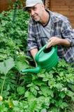 W średnim wieku mężczyzna nawadnia rośliny Fotografia Royalty Free