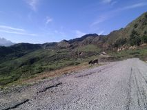 W średniogórzach droga penetruje góry zdjęcie royalty free