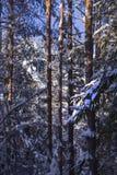 W świętym grove2 Fotografia Stock