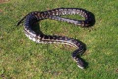 wąż Zdjęcia Stock