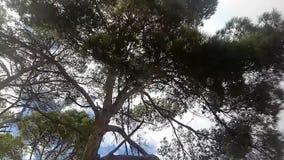 W?adza wiatr zdjęcie wideo