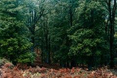 W Algierskiego las, Afryka Zdjęcia Stock