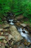 w amicalola creek upadkiem Obrazy Stock