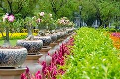 W Bankok ogrodowy kwiat Thailand Zdjęcie Royalty Free