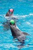 W basenie delfin sztuka Obrazy Stock