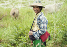 W Birma bydło chłopiec Fotografia Royalty Free