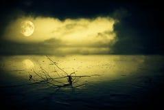 W blask księżyca zamarznięty jezioro zdjęcia royalty free