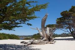 W Carmel plaża, Kalifornia obraz stock