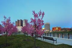 W centrum Kolumb, Ohio z kwitnącymi Czerwonymi pączkami Obrazy Stock