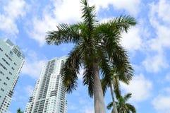 w centrum Miami Zdjęcia Stock