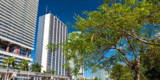 W centrum Miami drapacze chmur od Bayfront parka Obrazy Stock