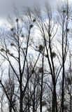 W chmurnym niebie nadzy drzewa. Zdjęcia Stock