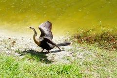 w ciemno ptaka latający ocean otwarte mewa skrzydła Fotografia Royalty Free