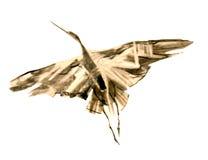 w ciemno ptaka latający ocean otwarte mewa skrzydła Zdjęcie Stock