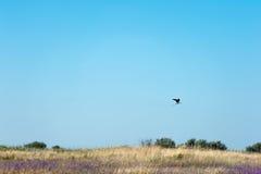 w ciemno ptaka latający ocean otwarte mewa skrzydła Zdjęcie Royalty Free