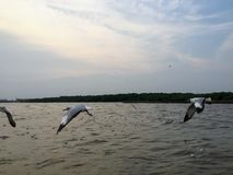w ciemno ptaka lataj?cy ocean otwarte mewa skrzyd?a zdjęcie royalty free