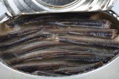 W cynie zakonserwowany ryba Zdjęcia Stock