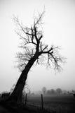 W czarny i biały sylwetki Drzewo obraz royalty free