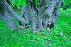 W czarodziejskim lesie Zdjęcia Stock