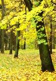 W dżdżystym jesień parku kolorowy ulistnienie Obrazy Stock