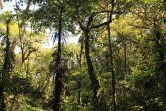 W dżunglę Zdjęcie Stock
