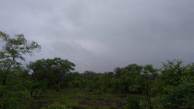 w dżungli Zdjęcie Stock