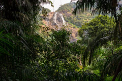 W dżungli siklawa Fotografia Royalty Free