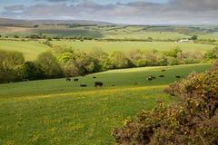 W Devon Exmoor Park Narodowy Fotografia Royalty Free