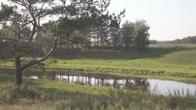 W doliny past stara sosna płynie rzekę, czarnego psa bieg przez łąki zdjęcie wideo