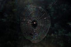 w domu jest pająk Obrazy Stock