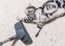 w domu vacuuming Jaskrawy dywan czy?ci us?uga r obraz royalty free