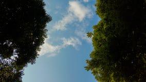 W drewnach patrzeje niebo obraz stock