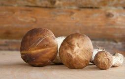 W drewnianej ścianie trzy lasowej pieczarki Zdjęcie Royalty Free