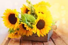 W drewnianym pudełku piękny słonecznikowy bukiet Obrazy Royalty Free