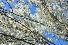 W drzewach zdjęcie royalty free