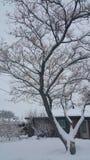w drzewo Obrazy Royalty Free