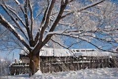 w drzewo Fotografia Stock